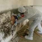 Mold-Removal-Remediation-2